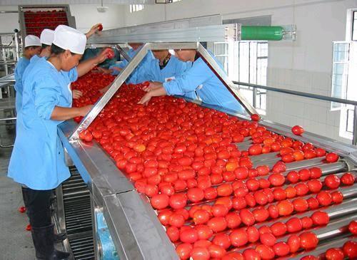 Tomato sauce filling machine