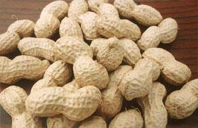 Peanut Inshells Henan origin with white color and clean from sandy soils