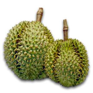Fresh and Frozen Whole Durian MongThong
