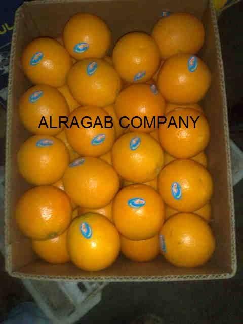 we offer Fresh Oranges