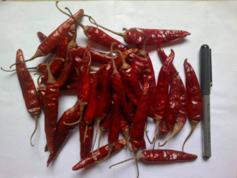 supply dry red chilli