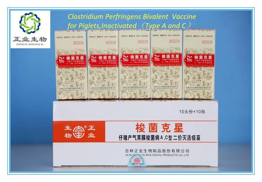 Clostridium Perfringens Bivalent Vaccine For Piglets,Inactivated