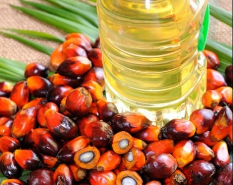 Refined Palm Oil / palm olein