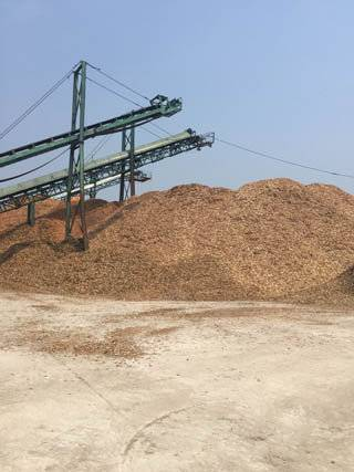 Wood chips Fuel or Paper