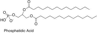 Phosphatidic Acid