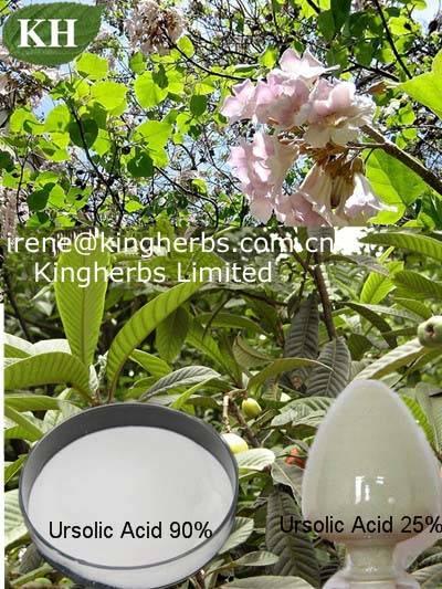 Ursolic acid /Bearberry leaf extract/malol/Folium Eriobotryae Extract /CAS: 77-52-1