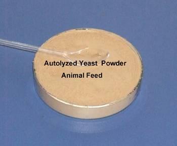 Autolyzed Yeast for aniaml feed