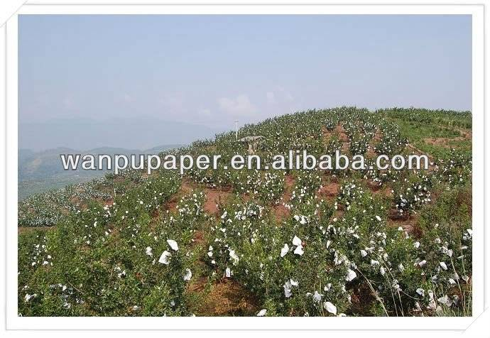 Apple Growing paper bag