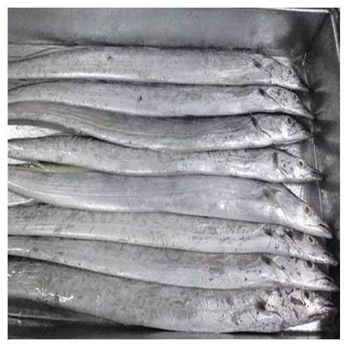 FROZEN RIBBON FISH WHOLE