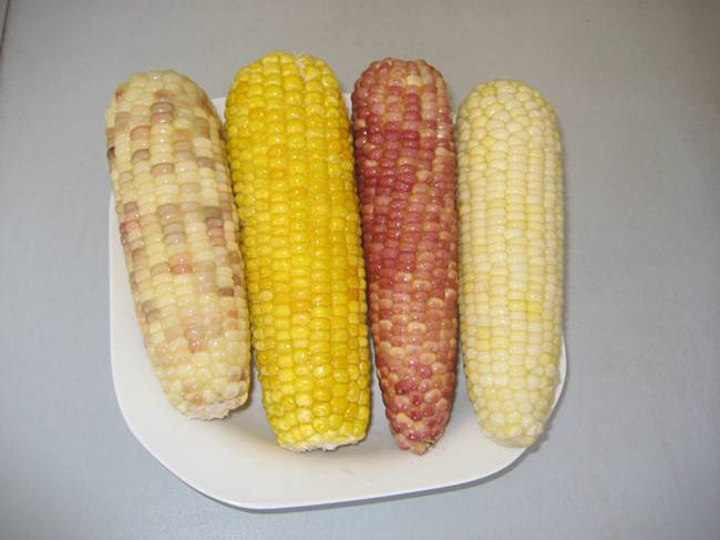 white sweet corn