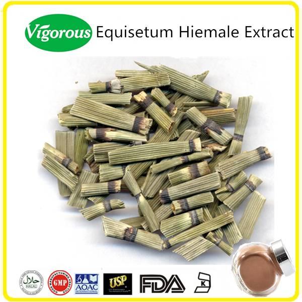 Halal Kosher Equisetum Hiemale Extract Powder