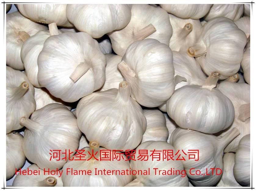2015 new crops garlic