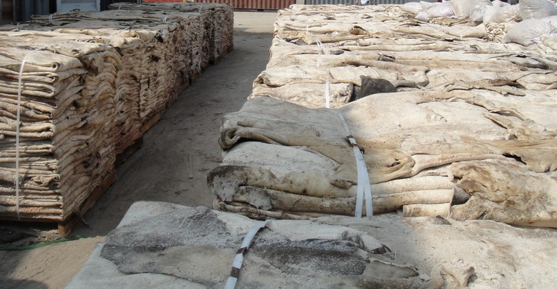Dry and Wet Salted Donkey Hides,Cow skin,sheep skin