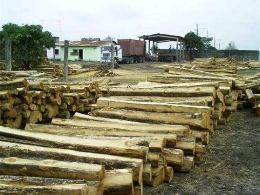 Teak rough squares logs