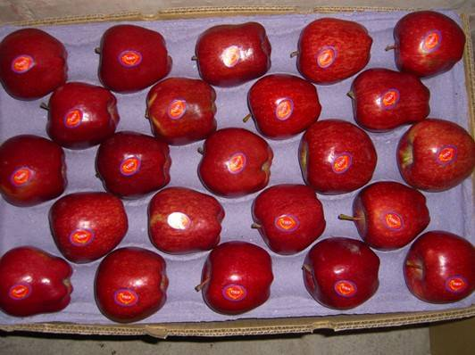 huaniu apple fresh red apple in shandong shaanxi shanxi from China