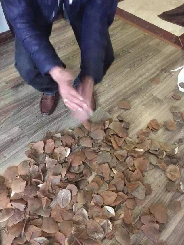 Urgent to purchase pangolin scales