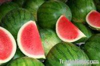 fresh water melon,fresh strawberries,fresh cabbage,raisins,