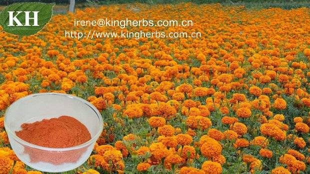 Lutein, marigold extract CAS :127-40-2