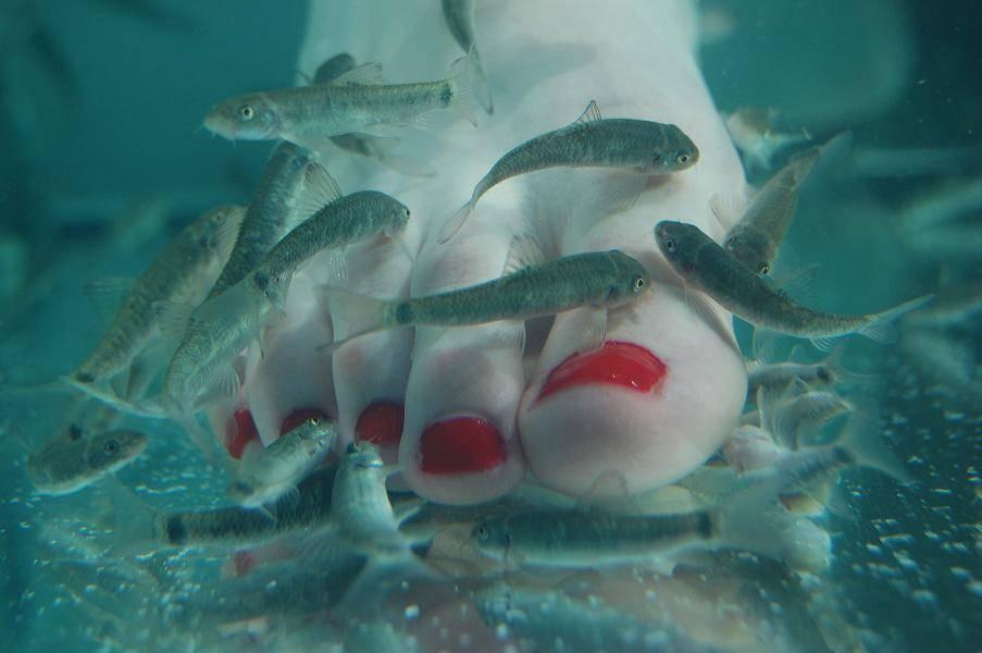 Doctor Fish Pedicure Spa