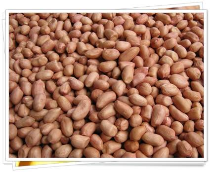 peanuts avaliable for export