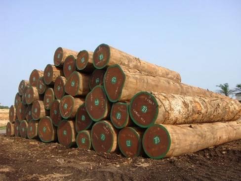 African Hardwood Timber / Logs /Lumber