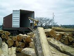Teak wood square logs