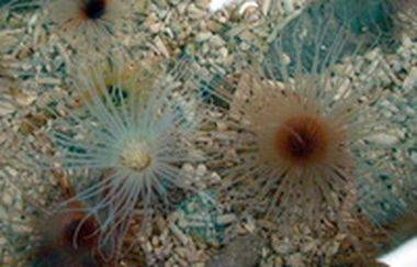 Marine invertebrates export