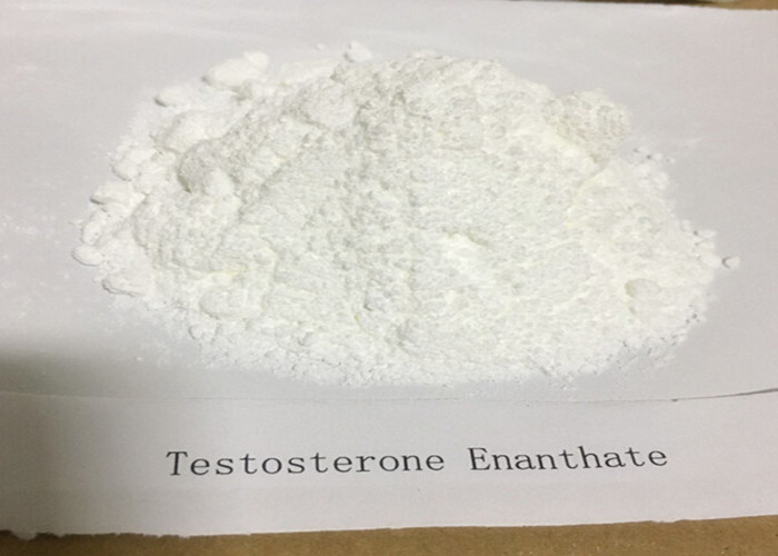 Testosterone Steroids Testosterone Enanthate Test Enanthate For Muscle Supplements CAS 315-37-7