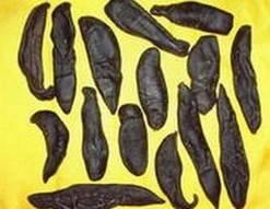 dry leech ------herbal