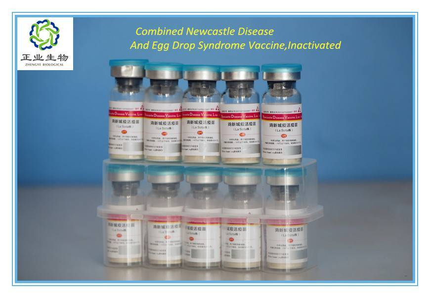Combined Newcastle Disease And Egg Drop Syndrome Vaccine,Inactivated