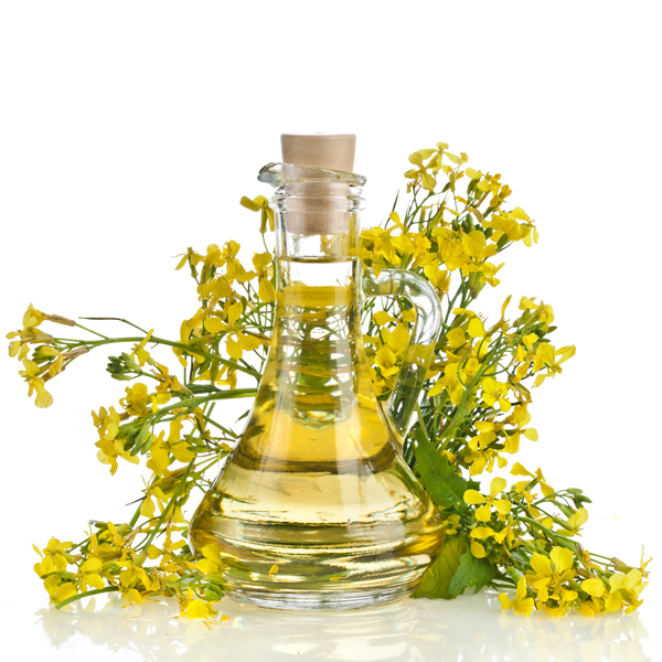 We Sell and Export Rapeseed oil