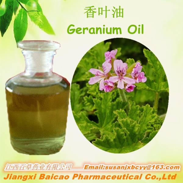 High quality geranium extract/Geranium Oil