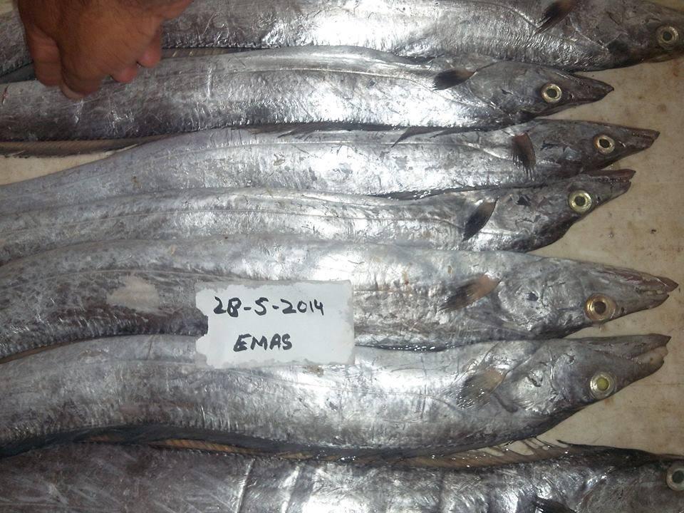 Ready Stock of Frozen Ribbon Fish
