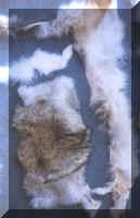 Dressed (Tanned )Fur Pelt Scrap