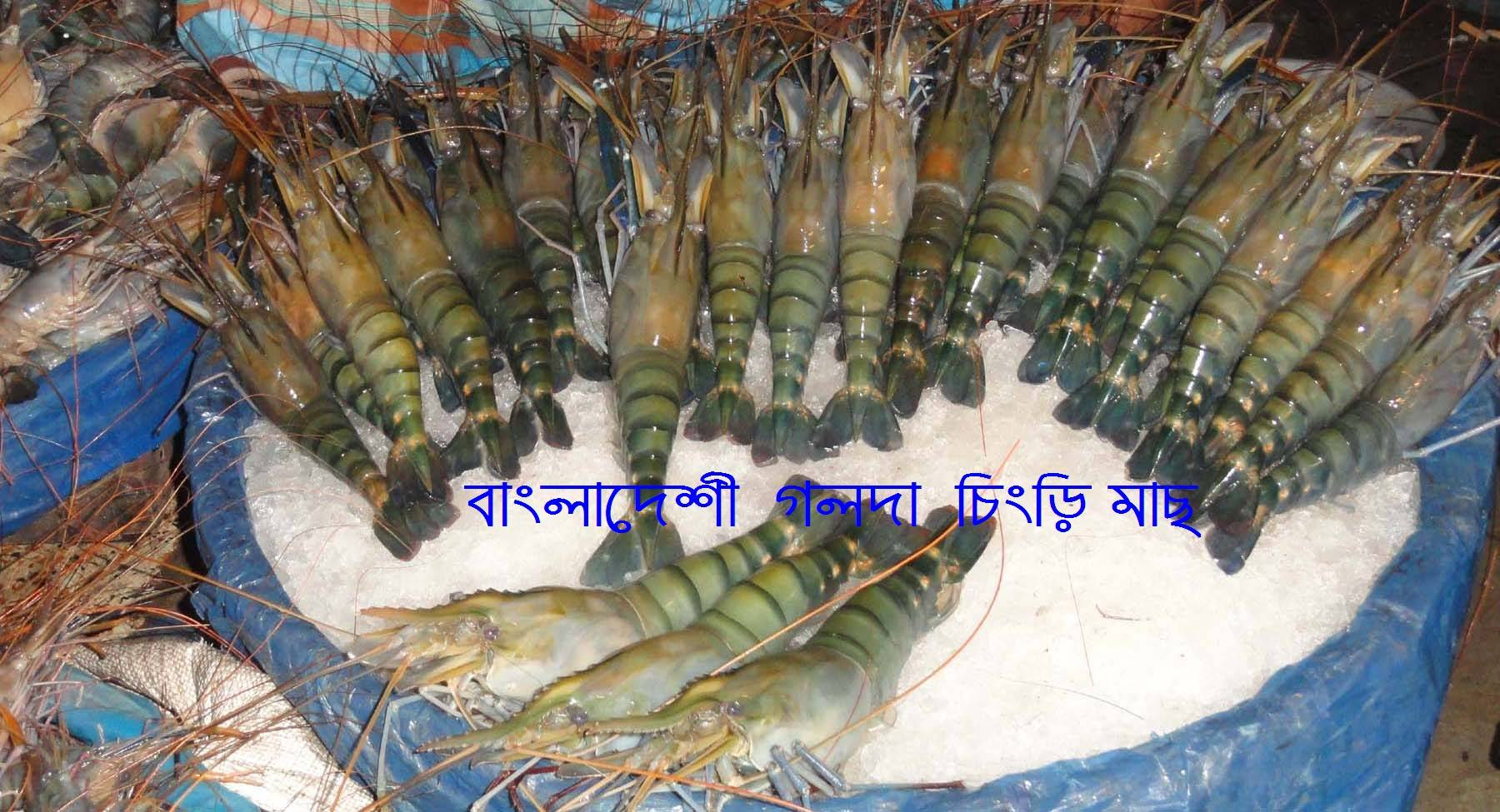 FRESH CHILLED FRESH WATER PRAWN