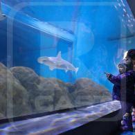 Aquarium / Oceanarium