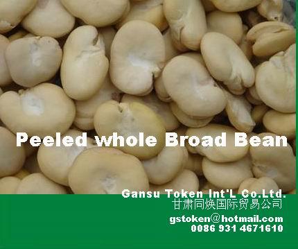 Peeled broad beans