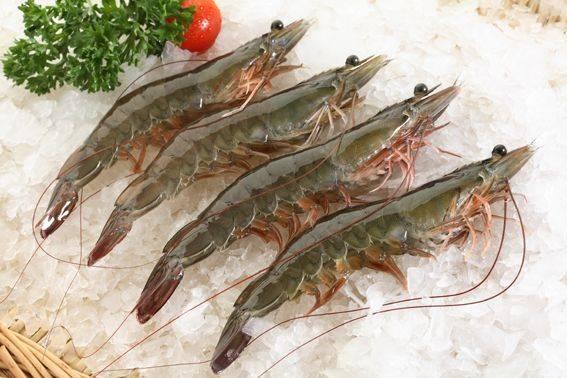 frozen vannamei shrimp Raw HOSO