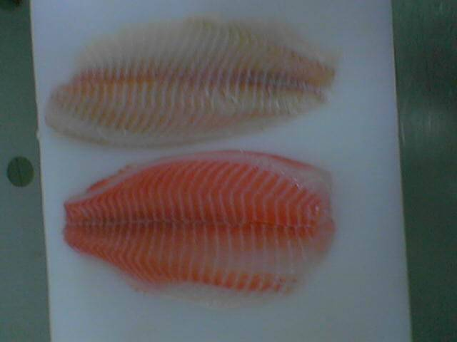 Sell red tilapia fish,black tilapia,koi,putti,rohu,Cuttlefish thailand
