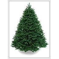 all kinds of christmas trees