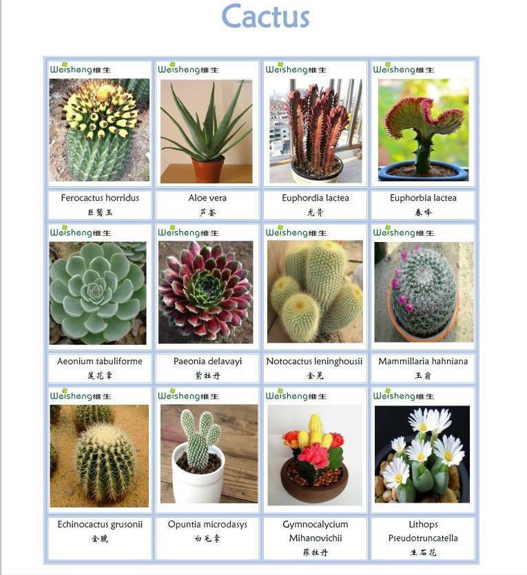 Sell all kinds of Succulents and Cactus