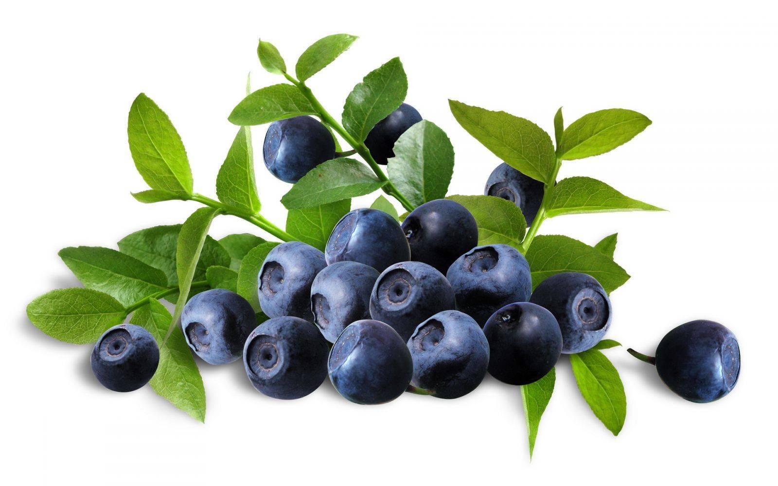 Frozen blackberry - bilberry (Vaccínium myrtíllus)