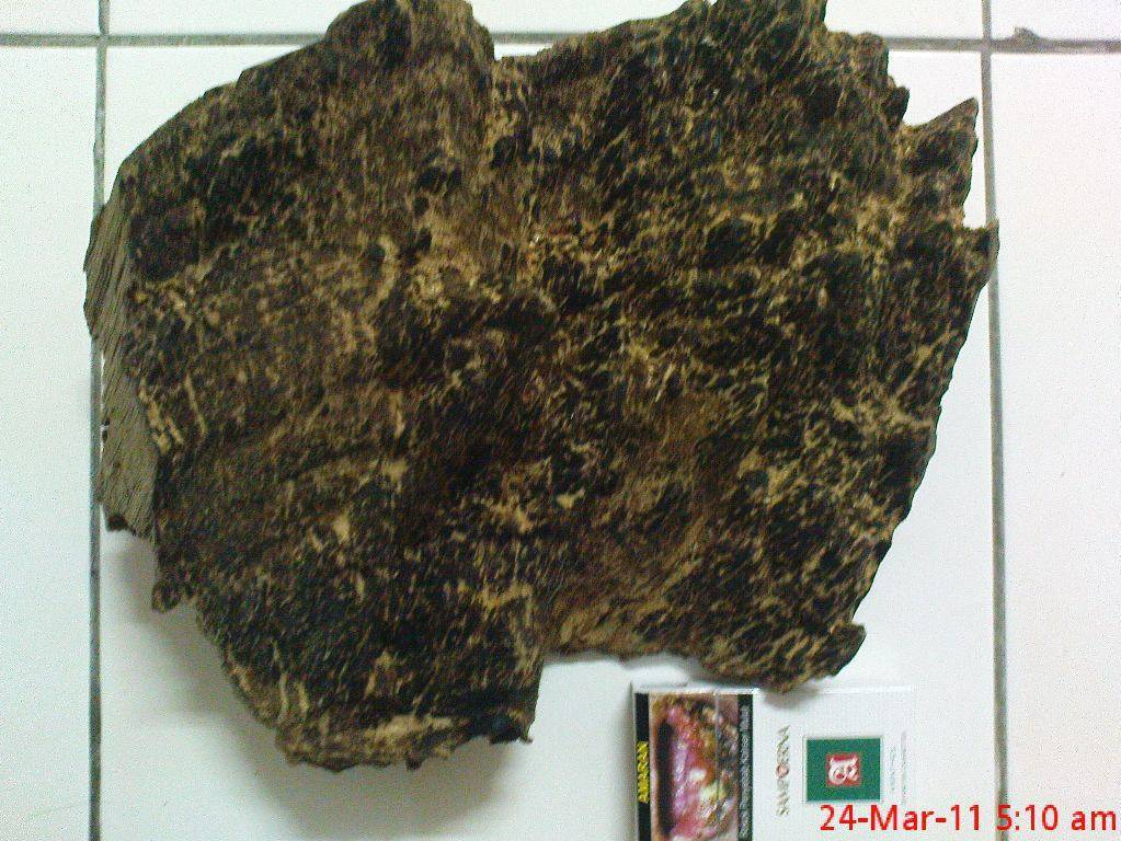 agarwood chips and oils