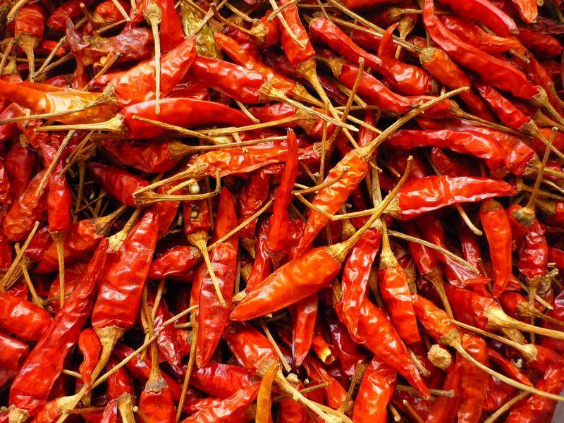 Offer for dried red chili from vietnam