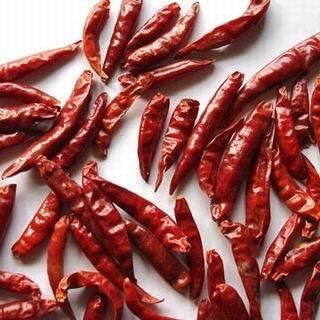 Chilli(Tianying Chilli)