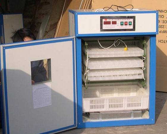 supply egg incubator for 352 eggs