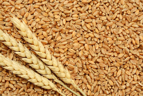 We are buyer of Wheat, Wheat Flour, Kidney Beans