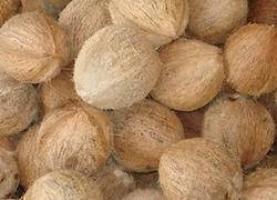 Fresh matured husked coconut from Africa-Natural
