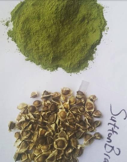 Moringa Leaf Powder and Moringa Seeds