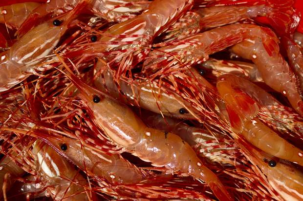 Sell Shrimps and Prawns